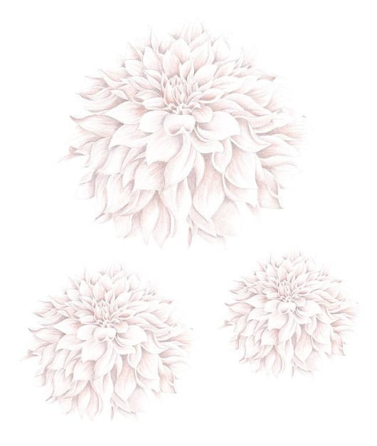 Image of   Stickstay Dahlias dusty rose